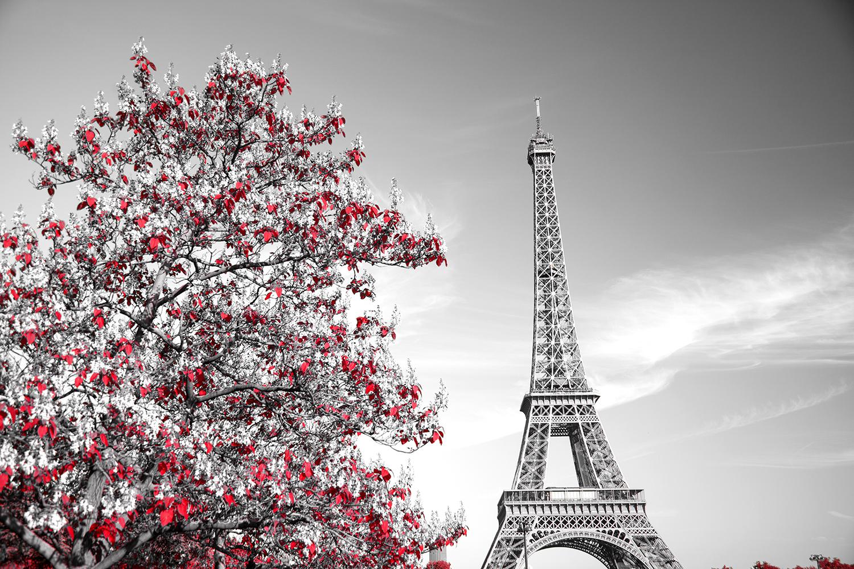 Duotone Paris Print A Wallpaper More